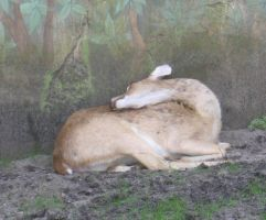 Sleeping Deer by LoveLikeHeroineStock