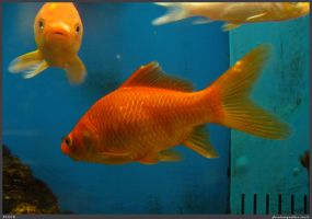 Fish Stock 0014 by phantompanther-stock