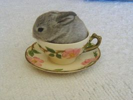Hare in my Tea by itsayskeds