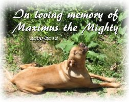 in loving memory of Maximus the mighty by CReevesABudd
