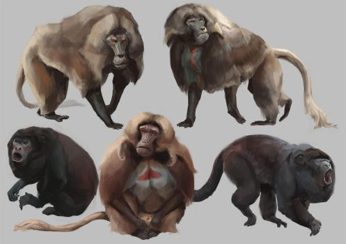 Monkeys studies by Windmaker