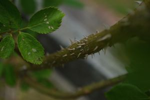 Thorny situation by jena4renna