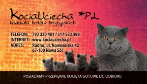 business card for KociaUciecha*PL by benny89sl