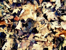 Leaves by PhotographyisArt123