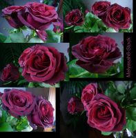 Rose Stock 6 by Melyssah6-Stock