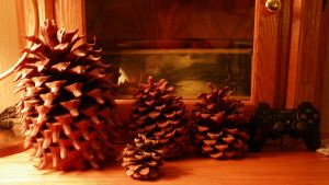 BIG ASS PINE CONE! by dadio46