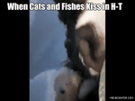 When Cats and Fishes Kiss in H-T by aspen4455