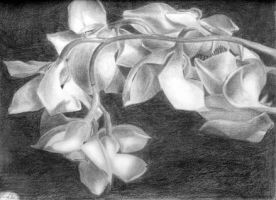 Orchids by wanderingaimlessly