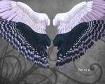 Feathered Wings by oldhippieart