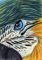 Parrot ACEO by bladebandit