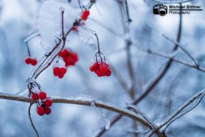 Strong winter by AustrianPictures
