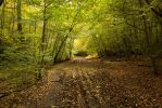 Burnham Beeches 2014 by parallel-pam