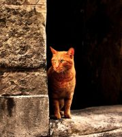 red cat by pauljavor