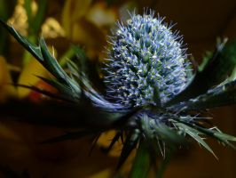 A little bit prickly by Hal-Pilk