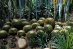 Cactuses by MihaelaJoeDesigns