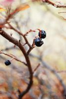 Wrinkled Berries by illumios