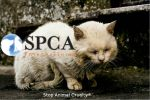 Stop Animal Cruelty by Latiasfan3