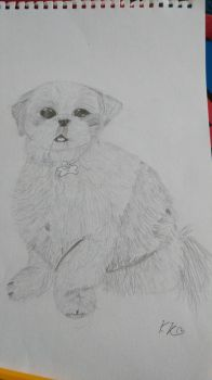 observational drawing, my dog  by the-anime-snowflake