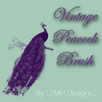 Vintage Peacock Brush by frenzymcgee