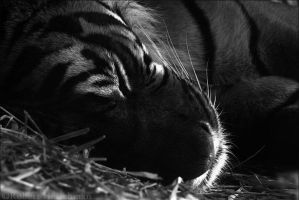 Black and White Week #5: Sleep by robbobert