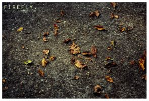 autumn leaves. by firefly05