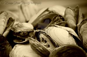 The Delicious Parts of Maine by jltrafton
