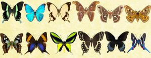 Windows  Icons Butterflies - Set 6 by Nastino47