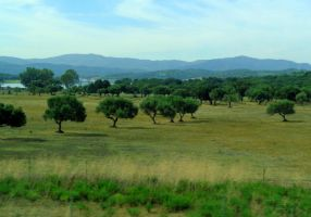 andalusian landscape by Mittelfranke