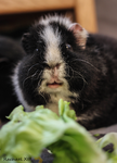 don't' touch my salad by RachaelXIII