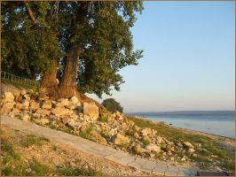 Old trees and Volga by mirator