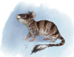 Striped rodent. by Moonticore