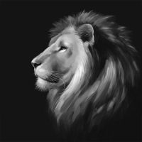 Lion by TanyG
