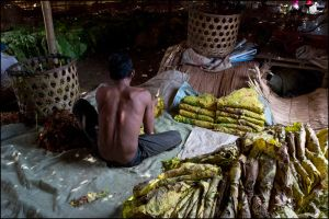 tobacco workers 2 mekong River by watto58