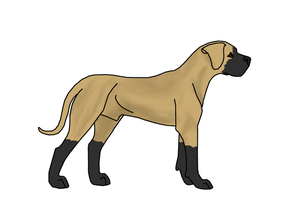 Great Dane by ShapeShifter314