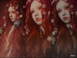 Rose of May by VampyrTenrai