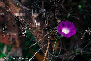 Beauty in the Dark by WhiteWingPhoto