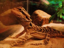 MY AWESOME LIZARD by 12345Death