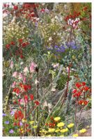 many multi wildflowers by jakwak