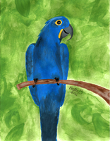 Hyacinth Macaw by theartsymom