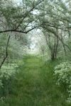 spring meadow 1 by yellowicous-stock