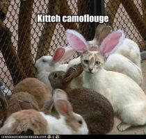kitteh camoflouge by Bon243