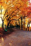 Autumn Path by SerapStock
