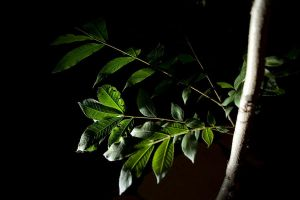 leaves at night by ace10414