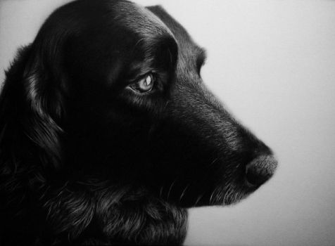 Baron - Pencil Drawing by Names76
