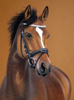 Horse Balou, Pastel Drawing by mo62