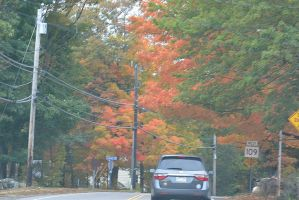 2014 Natural Autumn Color 10 by Miss-Tbones