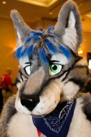 Up Close and Personal - FE 2013 by LightningTheFox7