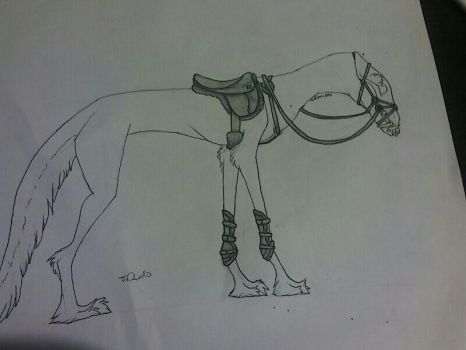 Canis all around english saddle. by lovebug-2