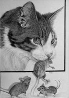 Cat with 3x mouse in Graphite by mo62