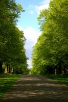 lime tree avenue. by x-kingsandqueens